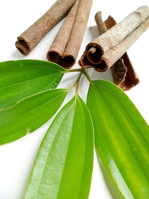 Cinnamon Leaf (Organic) Essential Oil